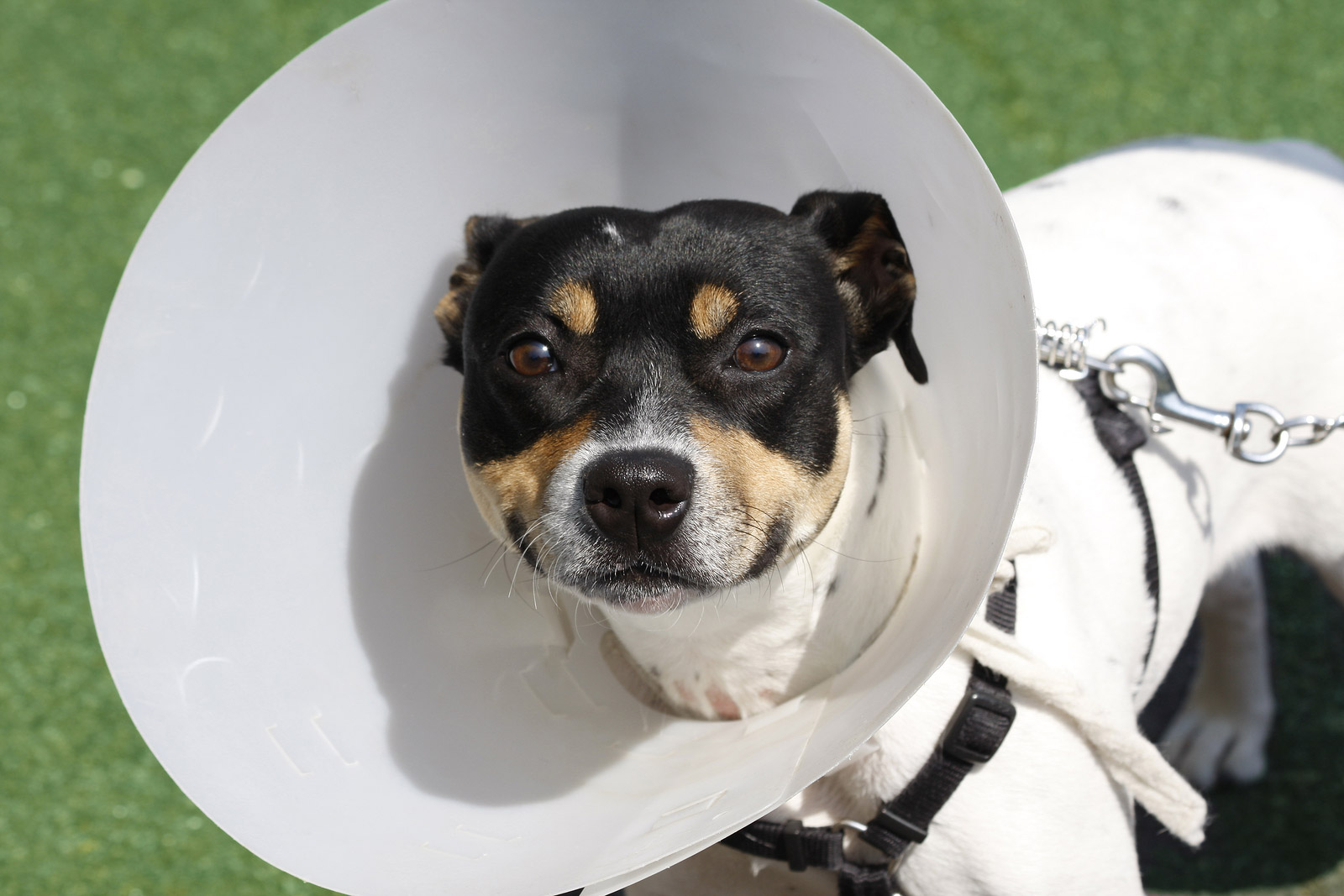 The Benefits of Spaying and Neutering